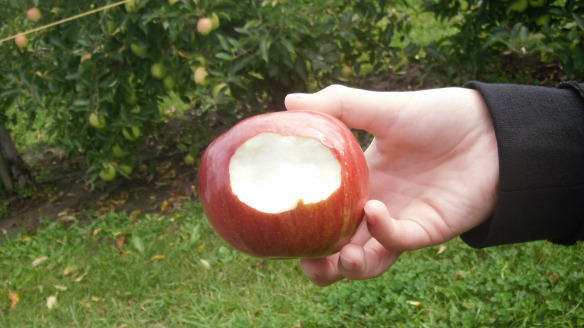 tasting a cortland apple at Watson's Apple Farm