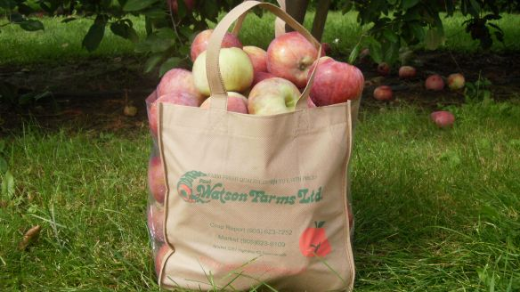 bag of freshly picked cortland apples at Watson's Apple Farm