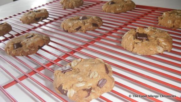 dairy,egg,peanut/tree nut free oatmeal chocolate chunk cookies cooling
