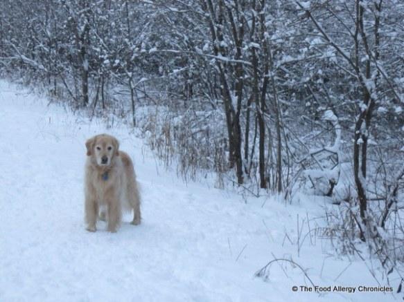 winter wonderland walk with Jagg, ottawa, 2011