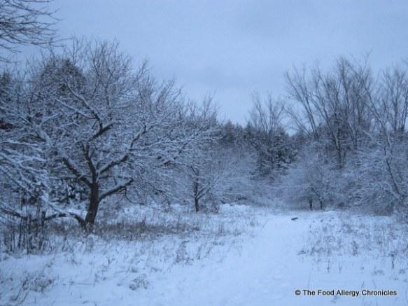 ottawa's winter wonderland 2011