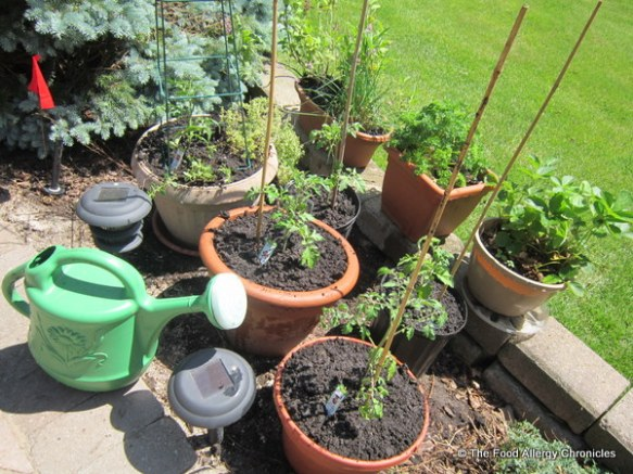 Mom's herb and tomato container garden