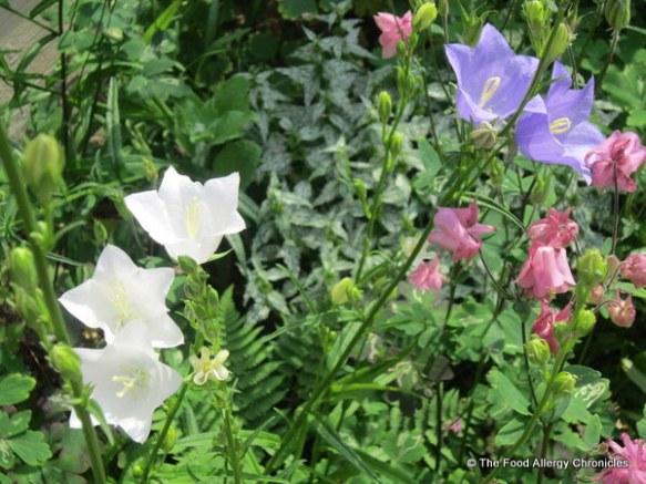 Flowers in my garden 2012
