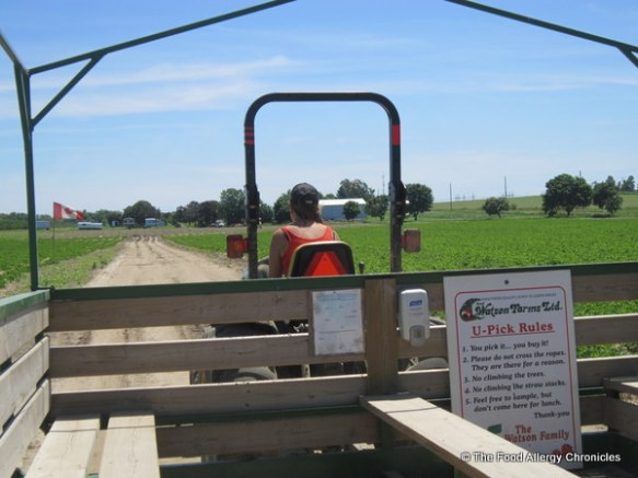 Heading out to the strawberry fields at Watson's Farms, 2012