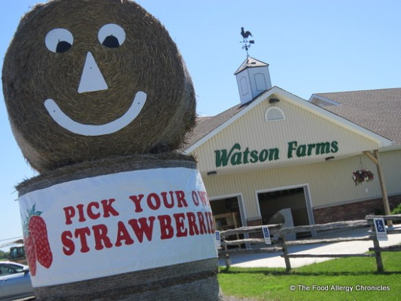 Watson's Farm, Bowmanville, 2012