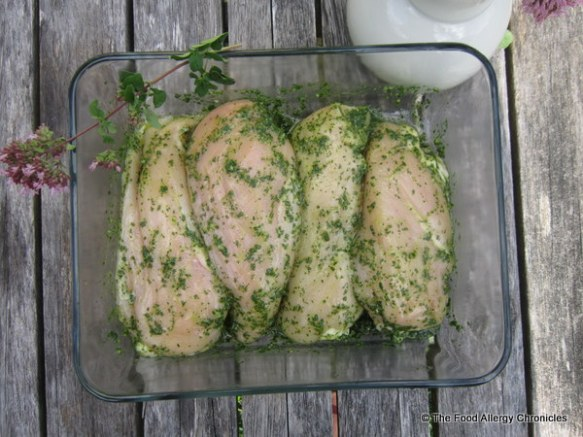 Chicken breasts marinating in Dairy and Peanut/Tree Nut Free Oregano Pesto