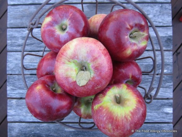 A basket of Cortland apples from MacMillans