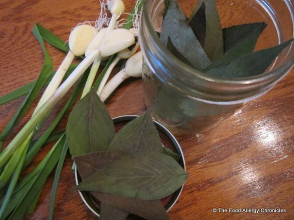 Garlic from the garden and dried Pineapple Sage leaves